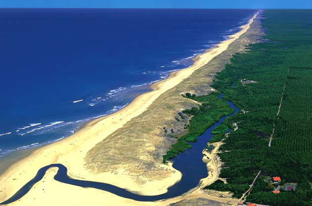 You have to traverse a pine forest before arriving at the Landes' coastline.