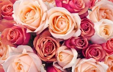 rupanya-ada-makna-disebalik-warna-bunga-ros-anda-terima