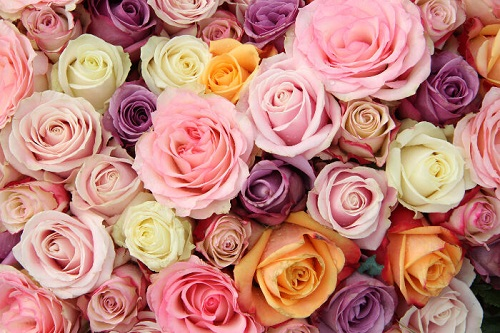 Rupanya Ada Makna Disebalik Warna Bunga Ros Anda Terima