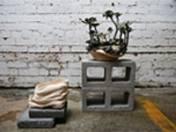 zhu ohmu, 植物繕い – plantsukuroi (before and after), 2015, ceramics, aeonium arboreum, 50 x 35cm, photo: zhu ohmu, made in melbourne, australia