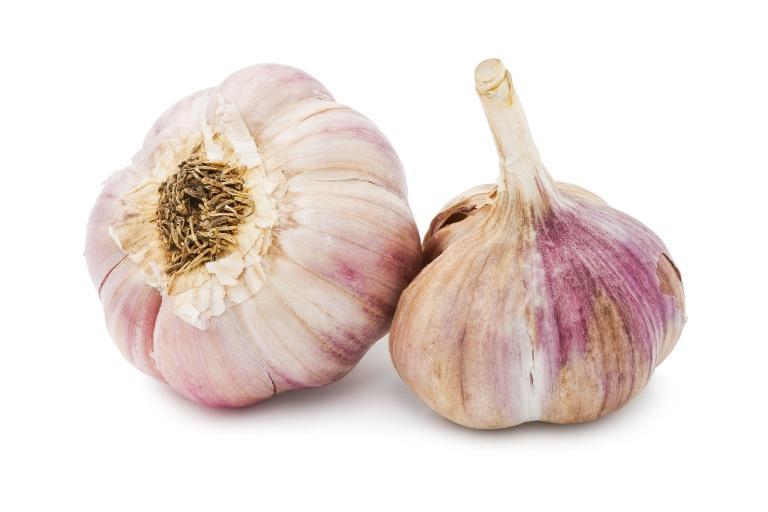 Garlic plant structure | Garlic Matters
