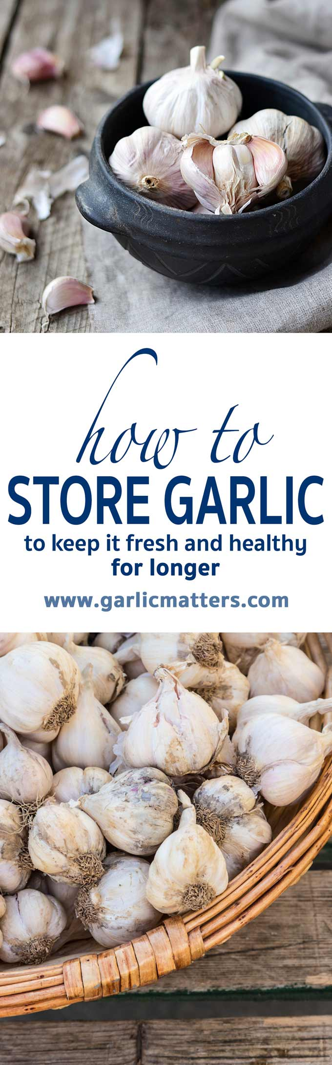 Storing Garlic - how to store garlic and keep it fresh for longer.