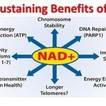 NAD precursors