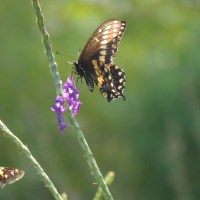 A Late Summer Visit to Norfolk Botanical Garden