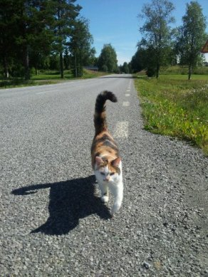 My cat Mina followed, all the way meowing...
