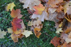 Leaves on the ground.