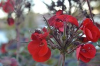 Close up bursts of red.