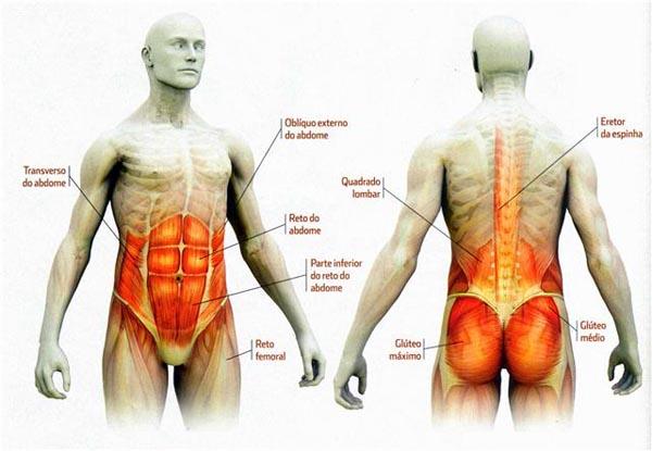 musculos-do-core