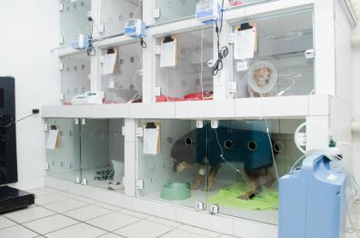 Internamento - Garra Hospital Veterinário