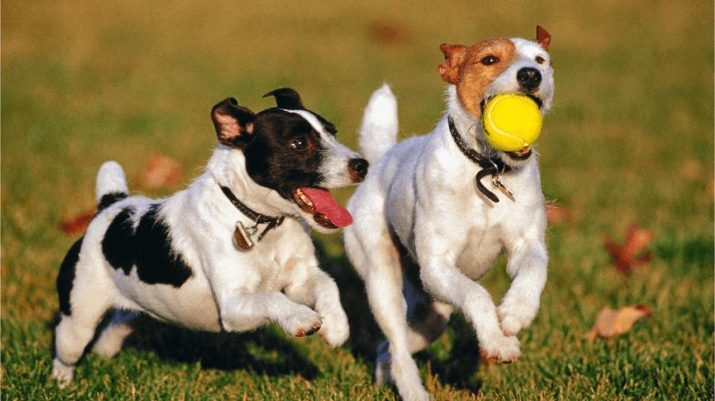 seguros de mascota Garresoler correduria de seguros