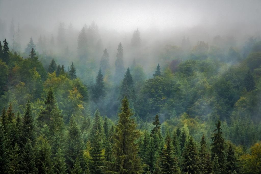 bosques protegidos