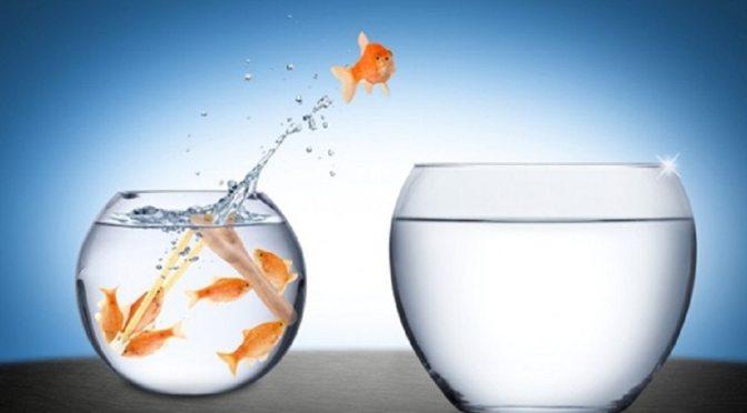 LinkedIn Career Explorer: The Secret Sauce for Career Transitions