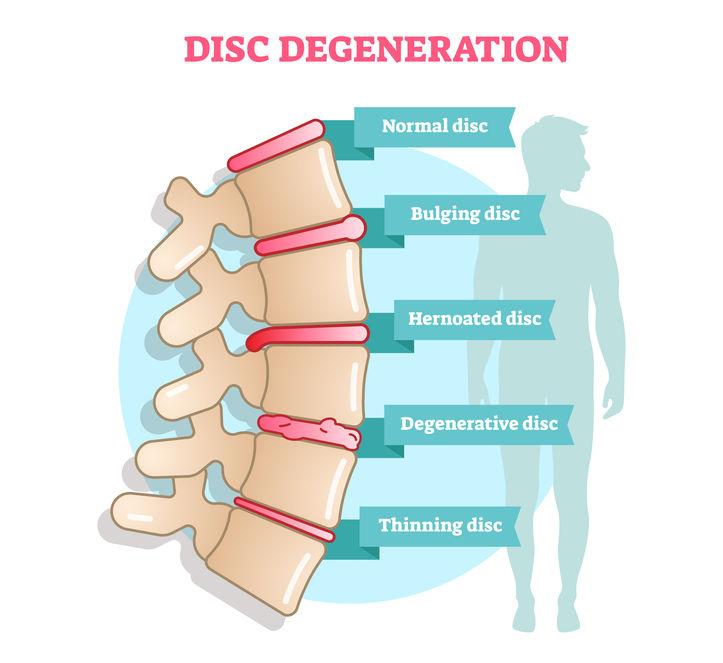 spine explained