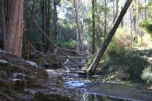 Wambelong Nature Trail, Warrumbungle Ranges (11)