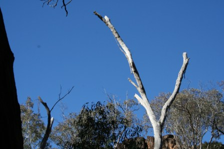 Wambelong Nature Trail, Warrumbungle Ranges (8)