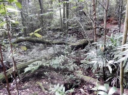 Composting in Nature Dorrigo Rainforest