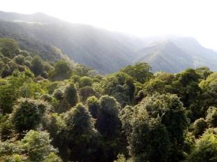 Dorrigo Rainforest