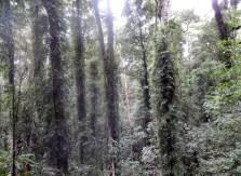 Rainforest Scenes Dorrigo