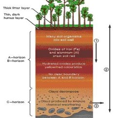 Amazon Rainforest Layers Diagram Automotive Wiring Diagrams Explained Free For You Tropical Rainforests Geography Forest Habitat Structure