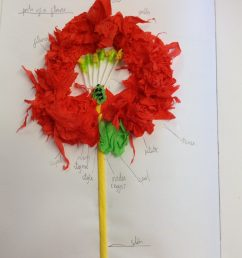ash class have been working hard in class creating flower diagrams they used their capitalising muscles to ensure that every part of the flower was  [ 1936 x 1936 Pixel ]