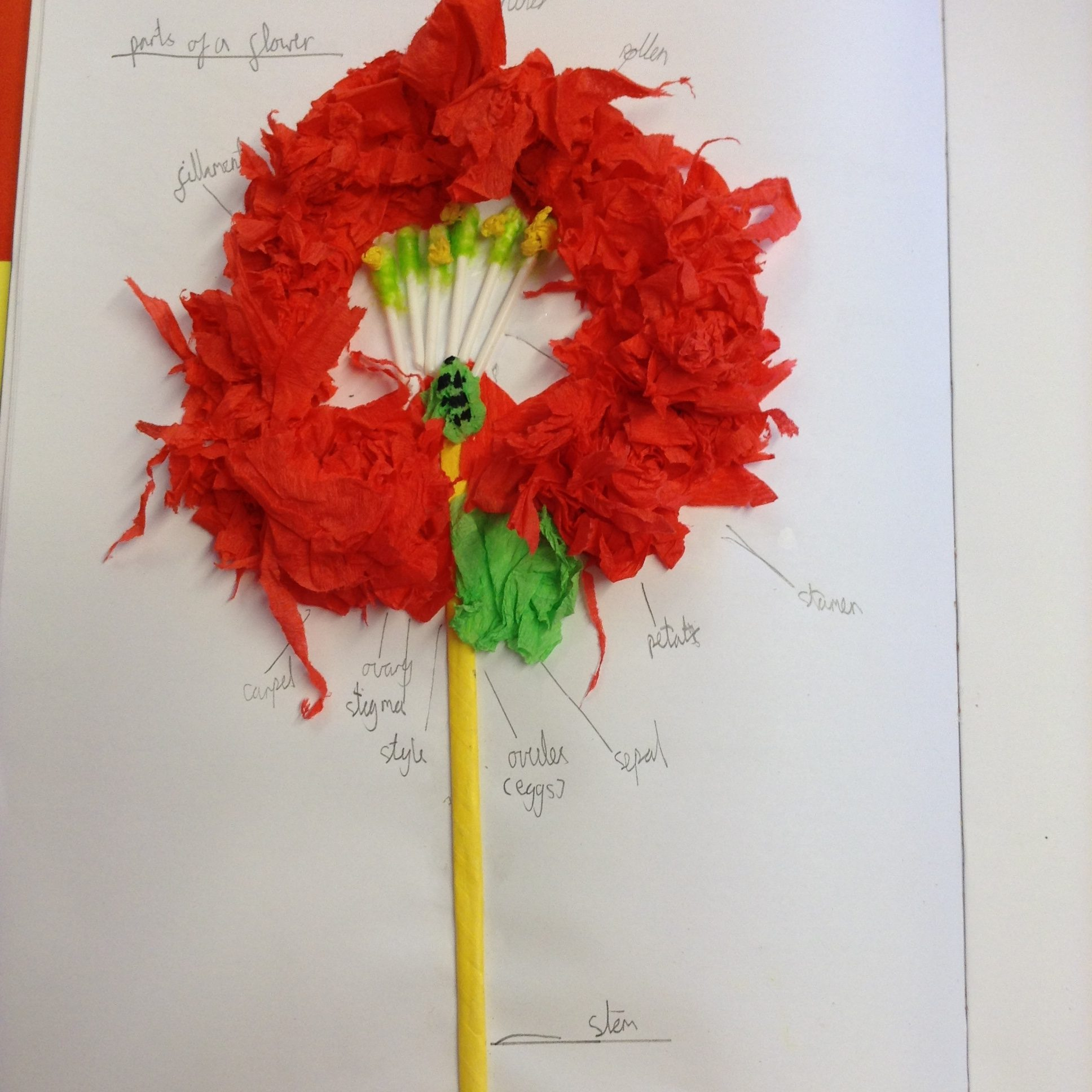 hight resolution of ash class have been working hard in class creating flower diagrams they used their capitalising muscles to ensure that every part of the flower was