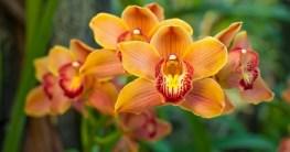Orchideen draußen halten