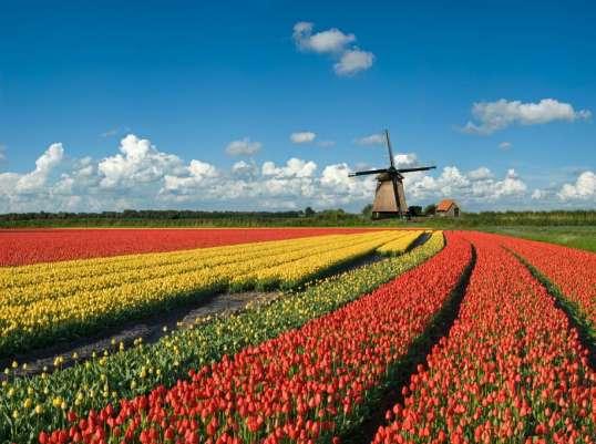 Holland Blumen Felder August