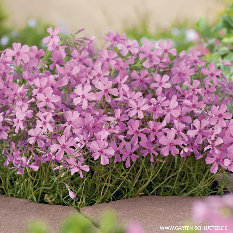 Pflegeleichte Pflanzen Fur Den Garten Balkonpflanzen Ganzjahrig