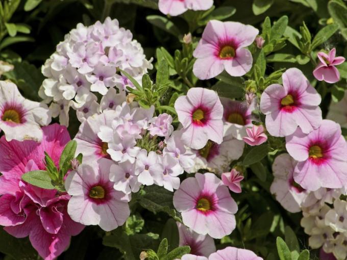 Gartenblumen  Garten