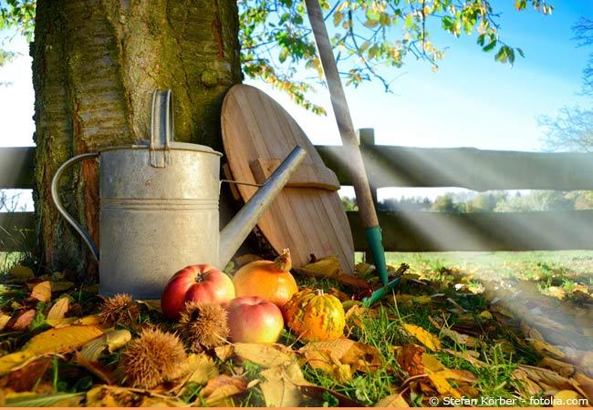 Gartentipps im September  Was kann jetzt geerntet werden Garten HausXXL Garten HausXXL
