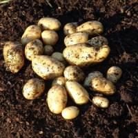 Kartoffelturm - nein danke