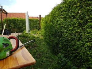Heckenschneiden Thuja Robin Geiss Gartenbau Memmingen
