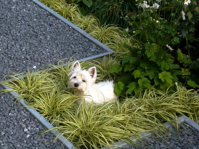 Kleiner schmaler Garten  Bilder und Beispiele zur Gartengestaltung