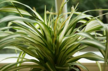 Giftige und ungiftige Zimmerpflanzen und Pflanzen