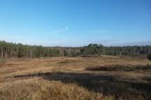Sandige Flächen und Kiefernwälder im Hintergrund - der Himmel ist hellblau