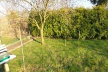 Um einen Baum herum sind Bambusstöcker aufgestellt und mit einem Faden verbunden. Links steht eine Gartenbank