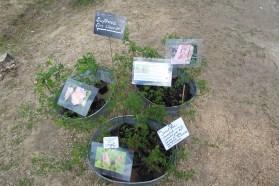 """Drei Zinkwannen mit zarten Pflanzen und Schildern wie """"Duftrose für's Wasser"""""""