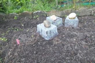 Alte Plastikschalen umgedreht auf Beet und mit Steinen befestigt