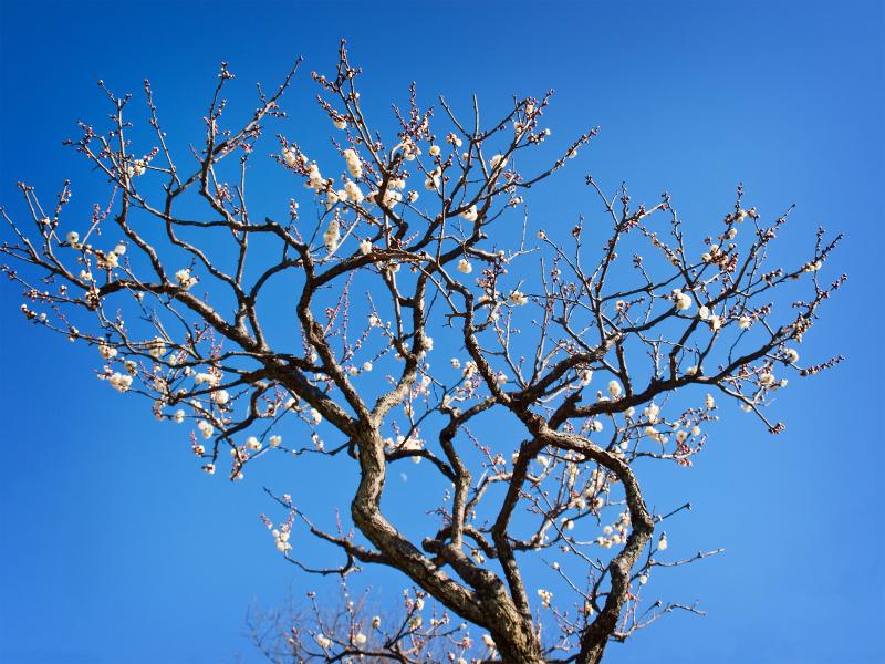 Etwas Neues genug Alten Kirschbaum Schneiden | Tnm - Shop #MI_68