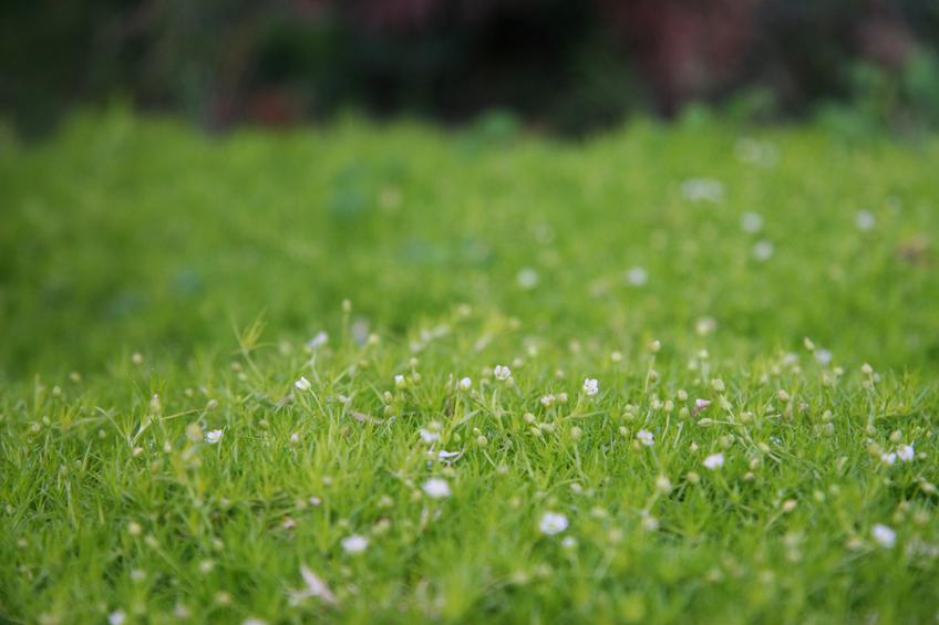 Alternative Zu Rasen Bloombux Hecke Sommer Phlora De
