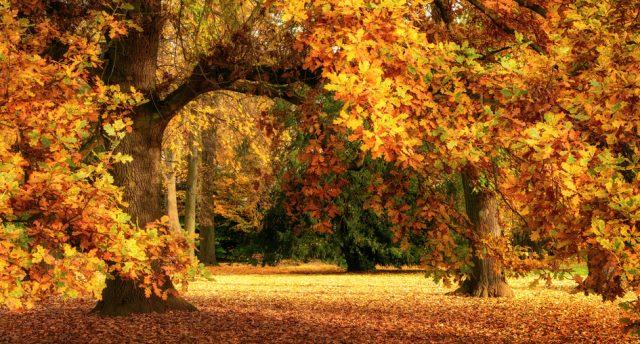 Fall Country Wallpaper Oktober Gr 246 Nis Gartenkinder