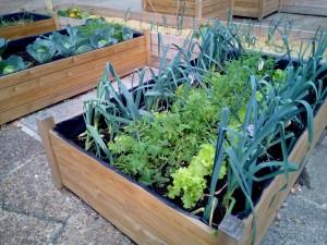 Gemüse Anbauen Eine Anleitung Garten Mix