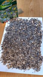 Saatbonitur Insektentreff