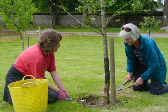 TLC for the Fruit Trees