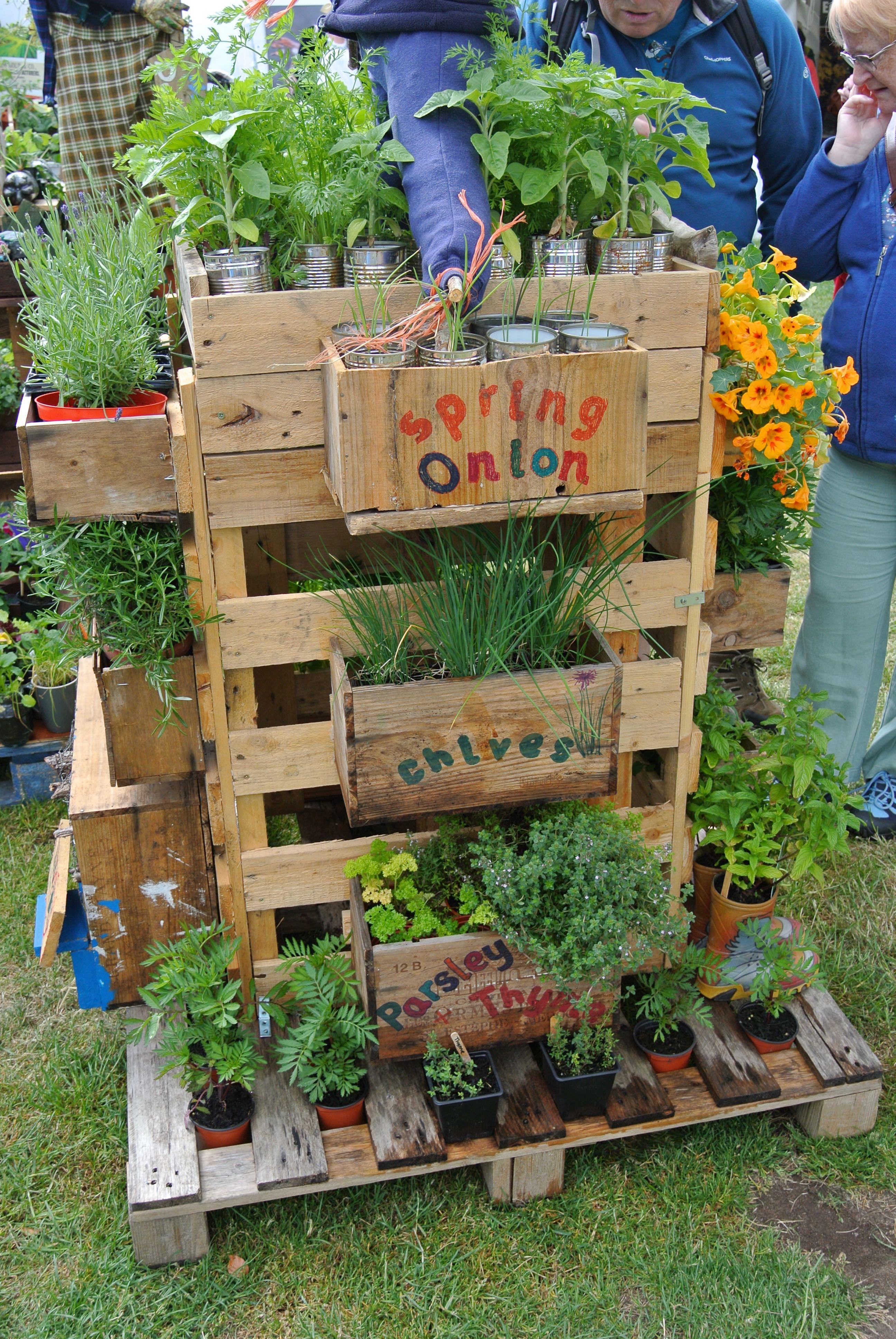 Gardening Scotland Pallet Gardens – Garthdee Allotments