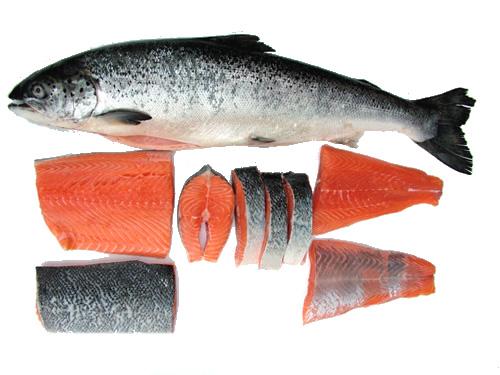 Suwir Ikan Tongkol Yang Enak