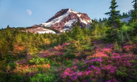 Heather on Mount Hood
