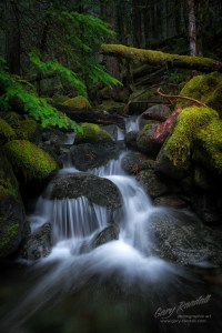 Creek in the Mount Hood National Forest