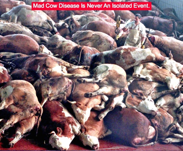 mad cow disease and prions