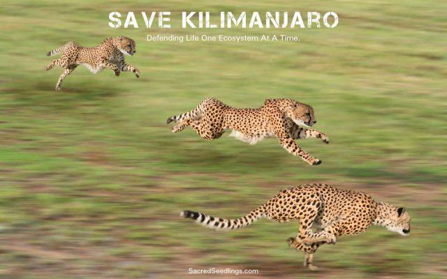 wildlife conservation Tanzania